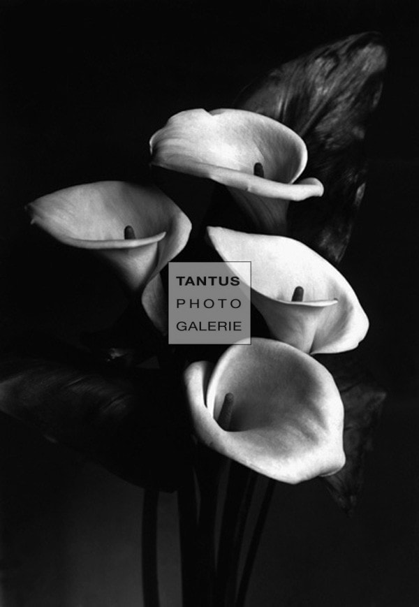 Callas_SEANSexton_Collection